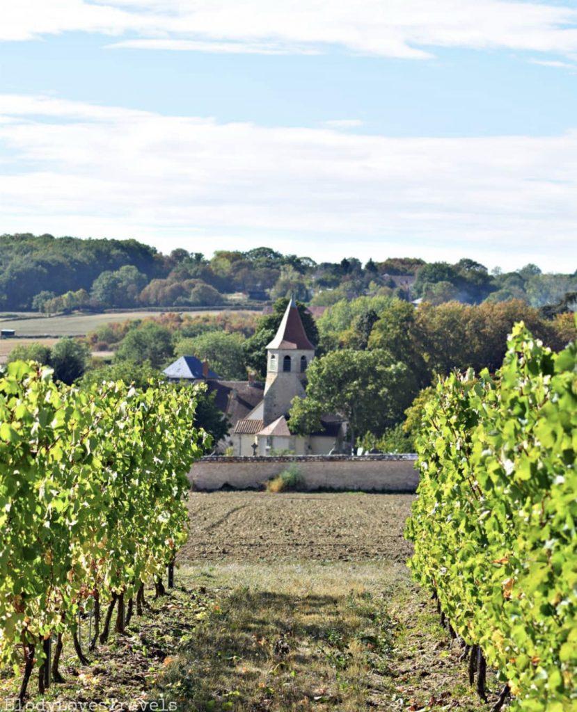 Vignes, Saint-Pourçain-sur-Sioule-sur-sioule, que voir a moins de 100 kilomètres de Vichy en Auvergne