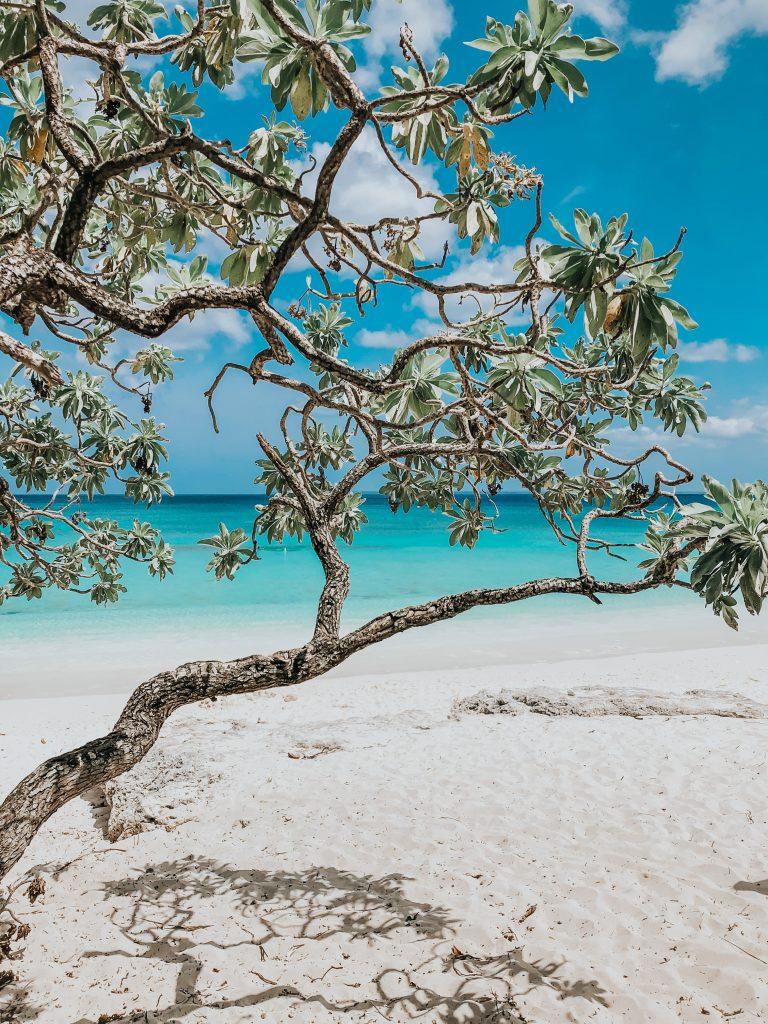 Rare arbre sur le plage de PENG avec au fond une mer aux eaux turquoises, île de lifou