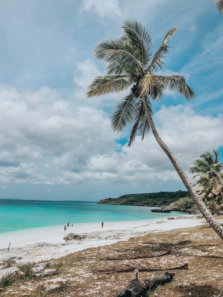 Cocotiers le long de la plage de Lifou