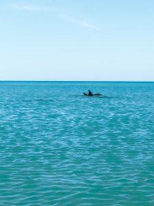 monkey mia dauphins