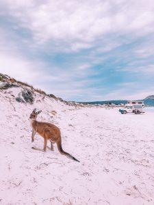Lucky Bay, Esperance, Australie, Road Trip côte ouest
